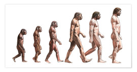 Póster  Timeline of human evolution, artwork - Lionel Bret