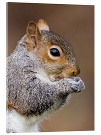 John Devries - Grey squirrel
