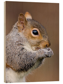 Cuadro de madera  Grey squirrel - John Devries
