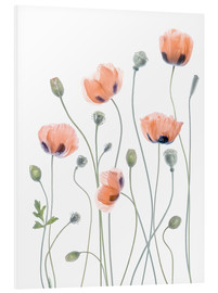 Cuadro de PVC  Poppy poetry - Mandy Disher
