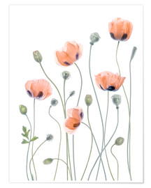 Póster  Poppy poetry - Mandy Disher