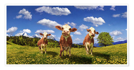 Póster  Cows on the pasture - Michael Rucker