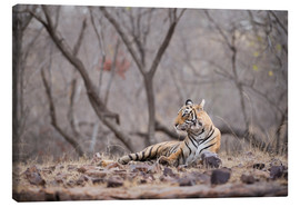 Lienzo  Bengal tiger, Ranthambhore National Park, Rajasthan, India, Asia - Janette Hill