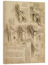 Madera  Muscles of the Spine - Leonardo da Vinci
