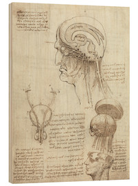 Madera  Brain and Skull - Leonardo da Vinci