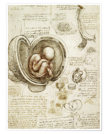 Póster  Studies Of Embryos - Leonardo da Vinci