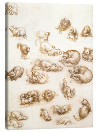 Lienzo  Study of a dog and a cat - Leonardo da Vinci