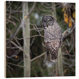 Cuadro de madera  Owl in the forest - Thomas Klinder