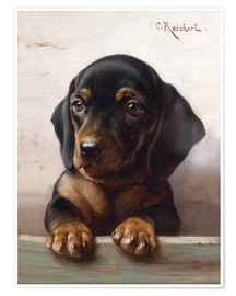 Póster Young dachshund