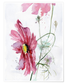 Póster  Cosmos flower watercolor - Verbrugge Watercolor