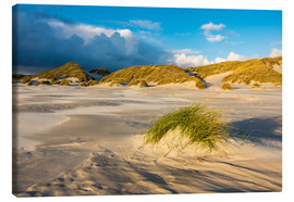 Lienzo  Dunes on the island of Amrum, North Sea