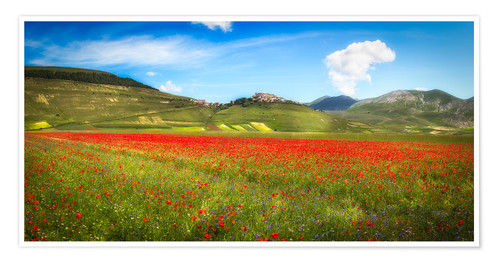 Póster Poppies at Piano Grande, Italy