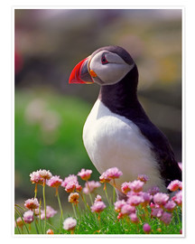 Póster Puffin