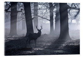Metacrilato  A male red deer stag waits in the early morning mists of Richmond park, London. - Alex Saberi