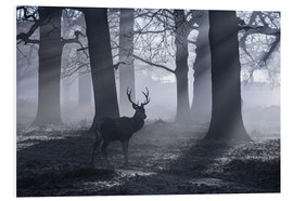 Cuadro de PVC  A male red deer stag waits in the early morning mists of Richmond park, London. - Alex Saberi