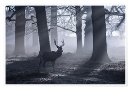 Póster  A male red deer stag waits in the early morning mists of Richmond park, London. - Alex Saberi
