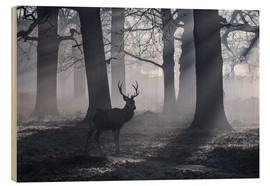 Cuadro de madera  A male red deer stag waits in the early morning mists of Richmond park, London. - Alex Saberi
