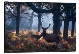 Cuadro de aluminio  A red deer stag in a misty forest in Richmond park, London. - Alex Saberi