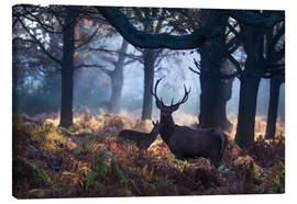 Lienzo  A red deer stag in a misty forest in Richmond park, London. - Alex Saberi