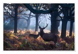 Póster  A red deer stag in a misty forest in Richmond park, London. - Alex Saberi