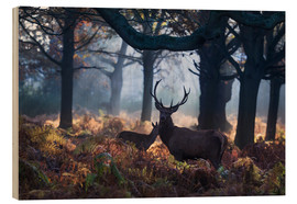 Madera  A red deer stag in a misty forest in Richmond park, London. - Alex Saberi