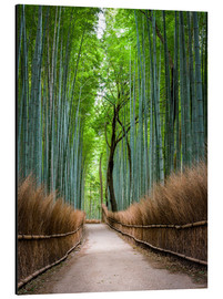 Aluminio-Dibond  Bamboo Forest in Kyoto Sagano Arashiyama, Japan - Jan Christopher Becke