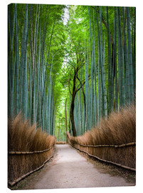 Lienzo  Bamboo Forest in Kyoto Sagano Arashiyama, Japan - Jan Christopher Becke