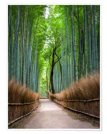 Póster  Bamboo Forest in Kyoto Sagano Arashiyama, Japan - Jan Christopher Becke