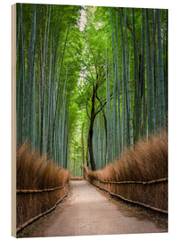 Cuadro de madera  Bamboo Forest in Kyoto Sagano Arashiyama, Japan - Jan Christopher Becke