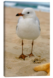 Lienzo  Seagull in the sand
