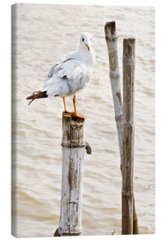 Lienzo  Seagull on pole