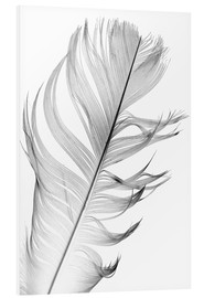 Forex  delicate feather