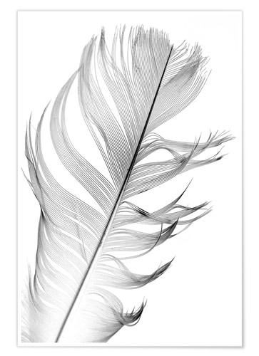 Póster delicate feather
