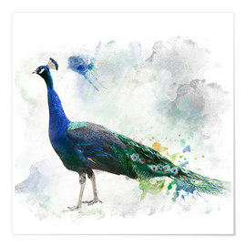 Póster  Peacock of the page