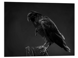 Forex  Crow