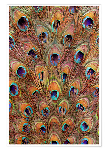 Póster Peacock feathers bronze