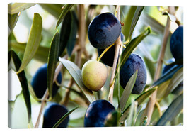 Lienzo  Olives on branch