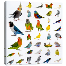 Lienzo  Parrots and parakeets