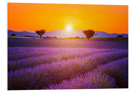 Forex  Sun over lavender