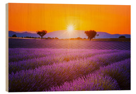Madera  Sun over lavender