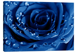 Lienzo  Blue Roses with Water Drops