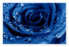 Póster  Blue Roses with Water Drops
