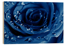 Madera  Blue Roses with Water Drops