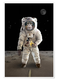 Póster Spacemonkey