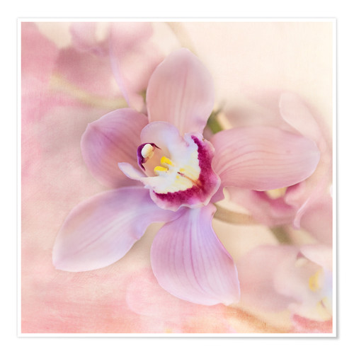 Póster orchids