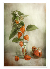Póster  Still life with Physalis - Mandy Disher