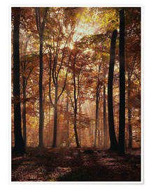 Póster Light incidence in the autumn beech forest