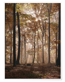 Póster Light incident and forest floor in the beech forest