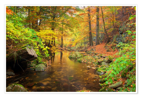 Póster Little brook in autumn forest