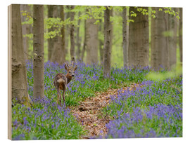 Cuadro de madera  Deer in a beech forest - Andreas Keil